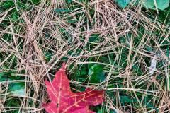 autumn-leafs